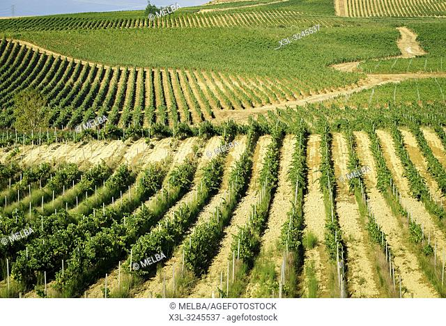Pagos de Araiz vineyard. Olite. Navarre. Spain