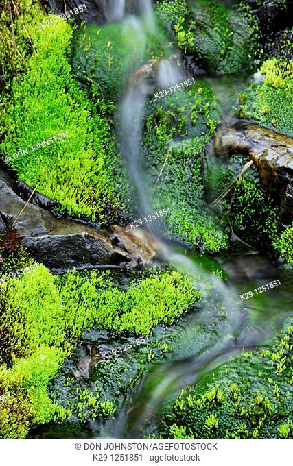 Moss beds lining streambed. Ontario. Canada