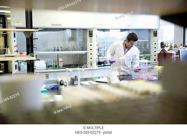 Scientist examining pipette trays in laboratory