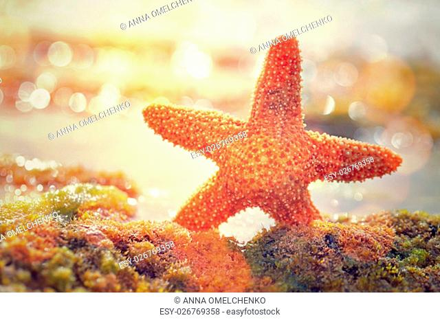 Beautiful starfish in mild yellow sunset light, beauty of exotic nature, relaxation on the beach, summer vacation concept