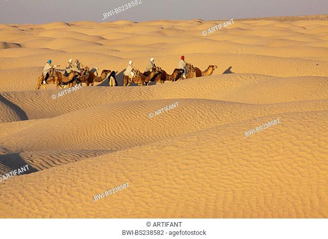 tourist caravan in North Sahara, Tunisia, Douz