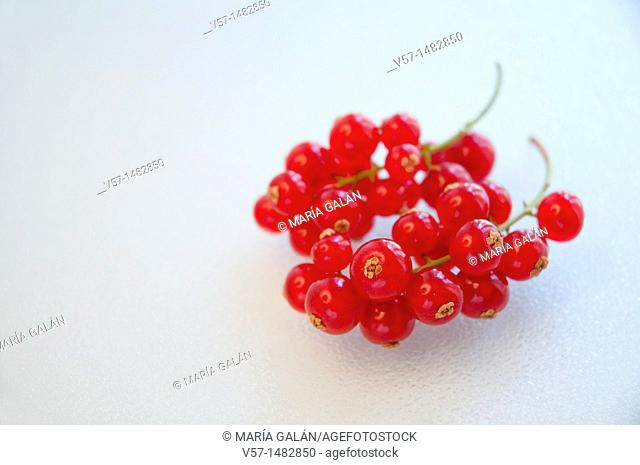 Redcurrant bunch. Close view