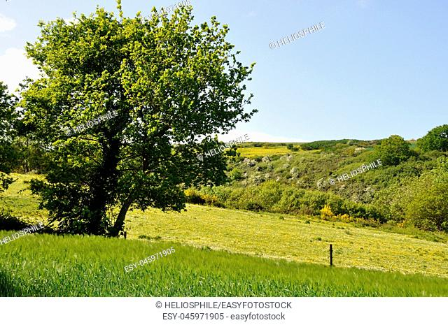 Green grass meadow woody hedgerow in France