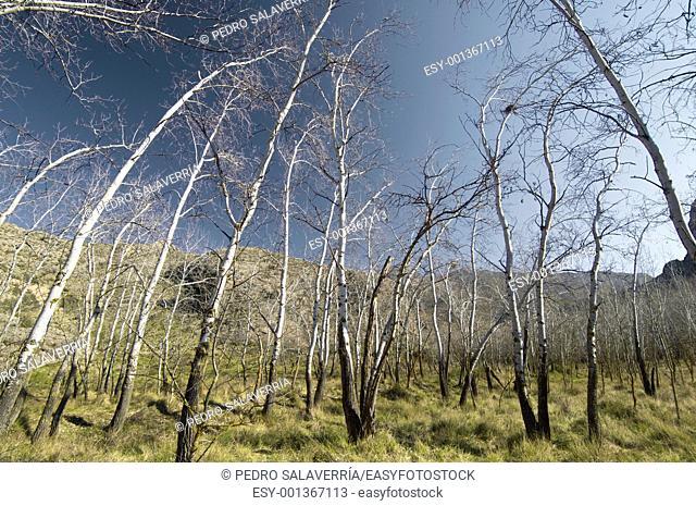 view of a forest in winter, Morata de jalon, Zaragoza, Aragon, Spain