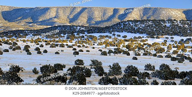 Pinyon Pine and junipers in the Cibola National Forest with fresh snow, near Magdalena, New Mexico, USA