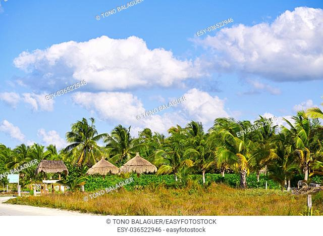 Holbox island tropical palm tree and huts palapas in Mexico