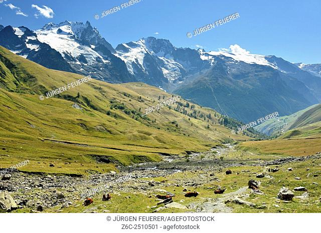 Stunning panorama landscape of snowcapped mountains and green alp with cows, Hautes-Alpes, French Alps, France
