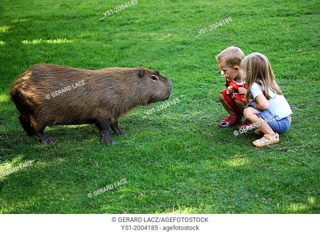 Children with Capybara, hydrochoeris hydrochaeris, Zoo in Normandy