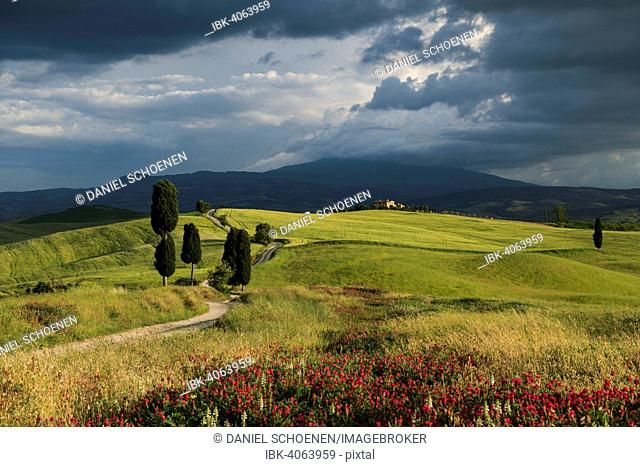 Landscape with rural road, near Pienza, Val d'Orcia, Province of Siena, Tuscany, Italy