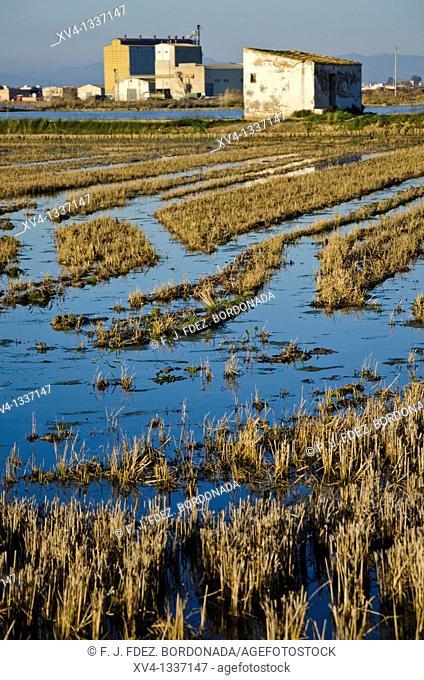 Ricefields in Delta del Ebro Nature Park  Tarragona  Spain