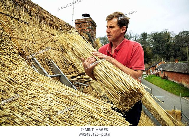 Thatcher standing on a roof, holding a yelm of straw