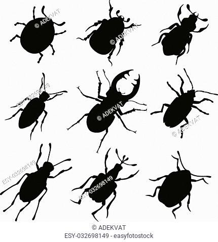 Colorful insects vector black and white collection. Insects biology natural isolated on white background. Insects isolated illustration