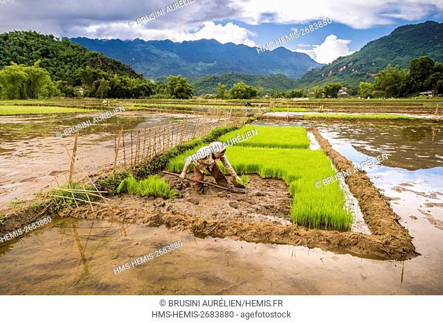 Vietnam, Mai Chau province, white Thaï (Thai Dam) working in the rice fields of the Mai Chau valley