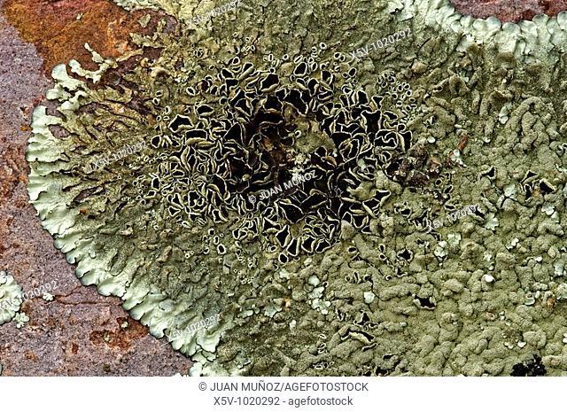 Lichens on rocks, La Serena, Badajoz province, Extremadura, Spain