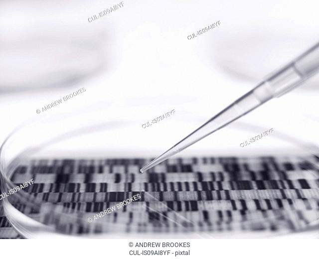 Pipette and petri dish with autoradiogram