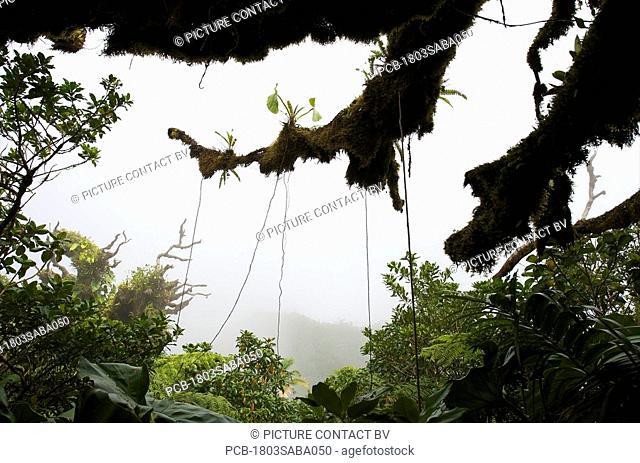 Saba, Mt Scenery, rainforest, tropical vegetation