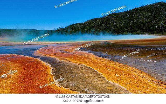 Algae. Grand Prismatic Pool