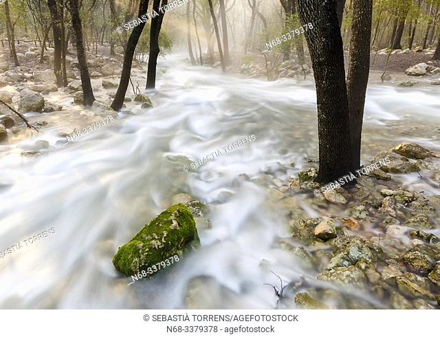Fonts Ufanes, water running inside the forest near Campanet, Majorca, Spain