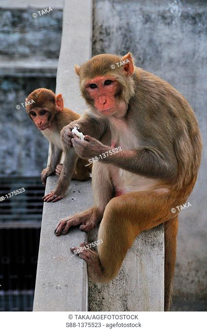 Sadhu told me that God need monkey  Because monkey help the God  There are many monkeys living by the ghat