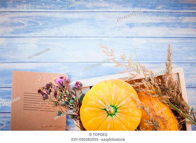 Top view of autumn orange pumpkins and dry flowers and grass in box thanksgiving background over blue toned wooden table with copy space