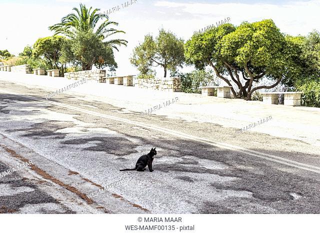 Greece, black cat sitting on road