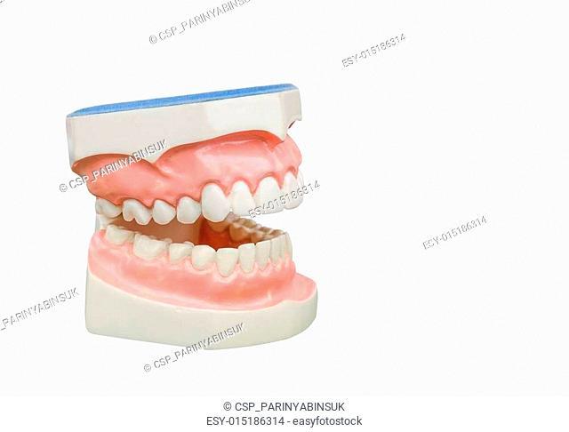 Dentoform, Dental teeth model isolated on white