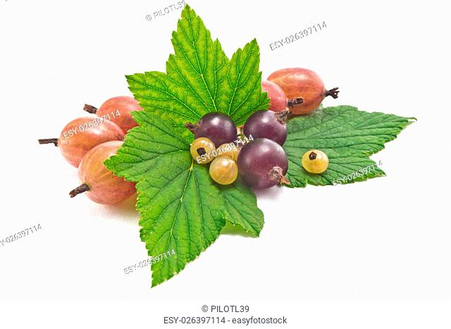 black currants and gooseberries with leaves on a white background