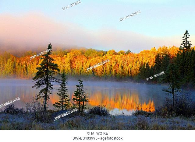 autumn morning mood at a lake eith mist and hoar frost, Canada, Ontario, Algonquin Provincial Park