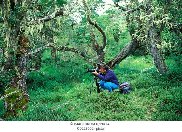 Photographer in the forest at the Rio Serrano, Torres del Paine National Park, Chile