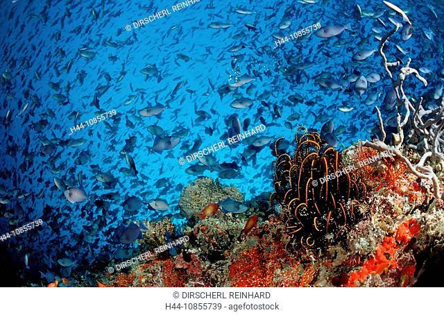 10855739, Maldives, Indian Ocean, Meemu Atoll, tri