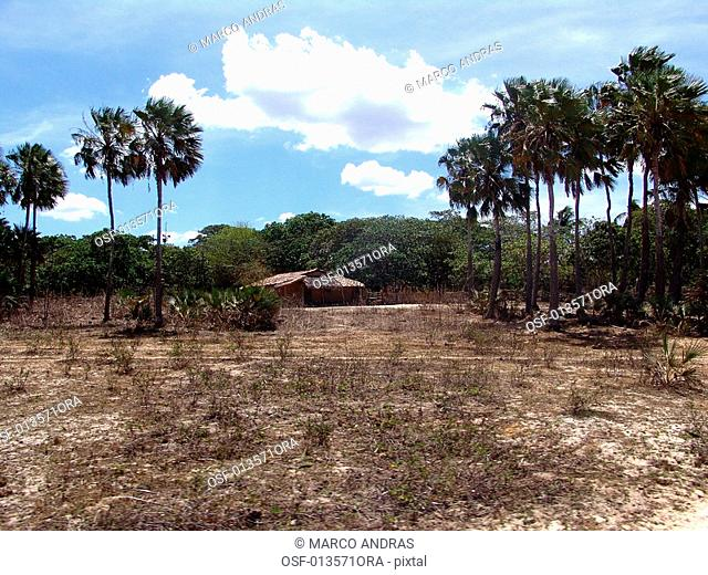 vegetation area at ceara dried place