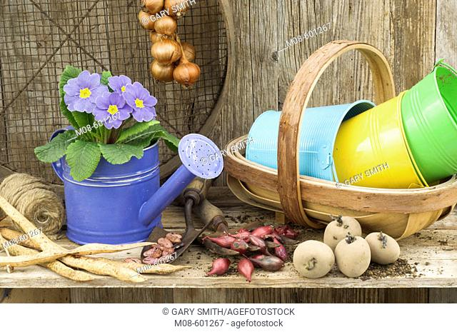 Potting Shed springtime still life with polyanthus, vegetables and garden tools in rustic garden setting