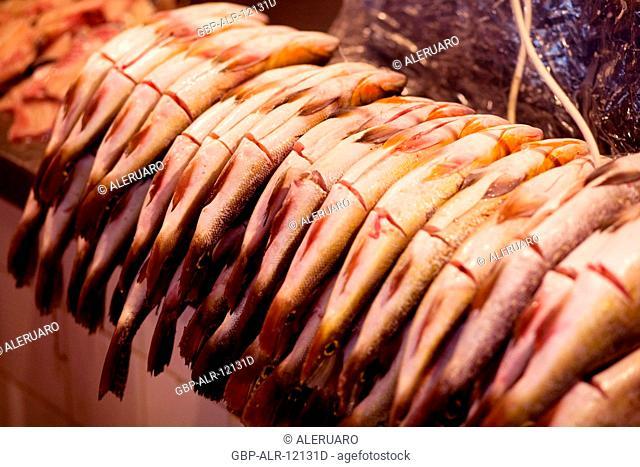Tucunaré, Fair of the Fish, Barão de São Domingos Collapse, Amazônia, Manaus, Amazonas, Brazil