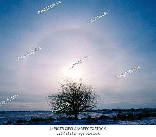 Halo cloud with a tree. Poland