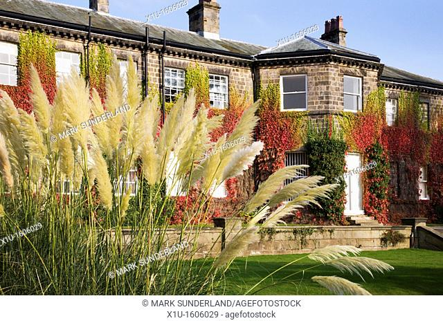 Pampas Grass at Conyngham Hall Knaresborough North Yorkshire England