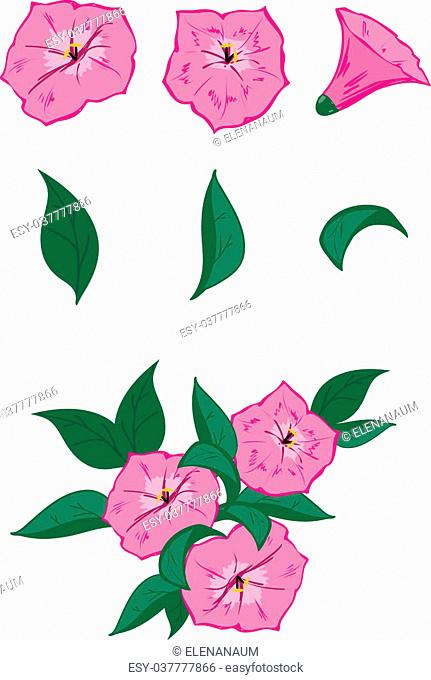 Vector objects for drawing up own flower compositions: 3 pink flowers of a petunia and 3 leaves. And also an example of possible composition