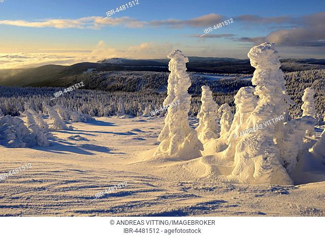 View from the Brocken on forests in winter, snow-covered pines, Harz National Park, Saxony-Anhalt, Germany