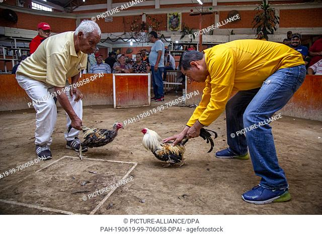 16 June 2019, Mexico, Chimalhuacan: Freddy (r) and a friend (l) train their cocks shortly before a fight. Animals are carefully raised in Mexico for such cock...