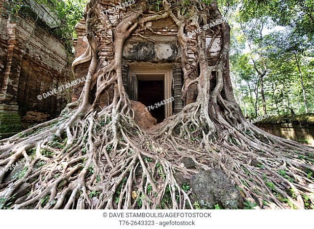 Tree roots wrapped around the hidden jungle temple of Prasat Pram at Koh Ker, Siem Reap, Cambodia