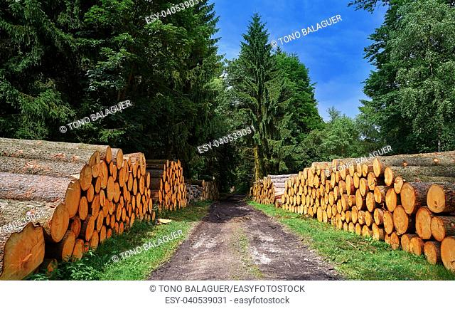 Wooden logs timber stacked in Harz mountains of Germany