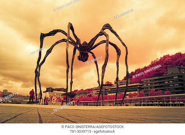 spider in the ria de Bilbao, mom, Spain