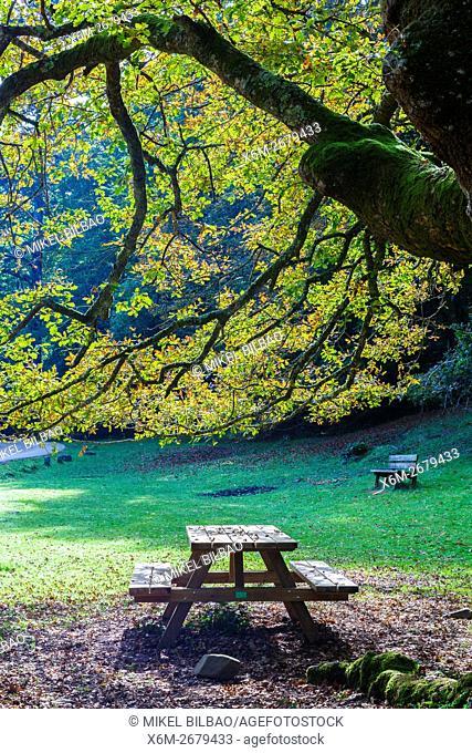 Tree and recreation area. Ucieda. Saja-Besaya Natural Park. Cabuerniga valley. Cantabria, Spain
