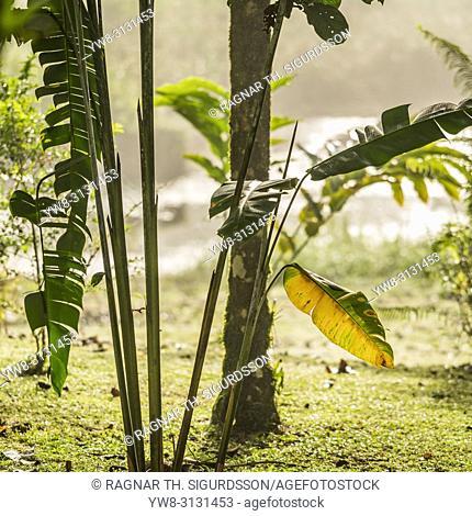 Palm Trees, Maquenque National Wildlife Refuge, Costa Rica