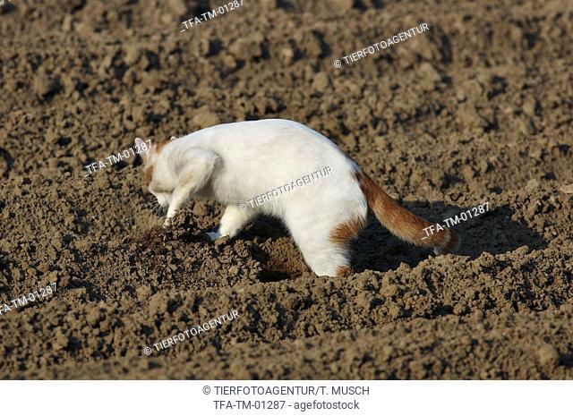 Bury pet cat Stock Photos and Images | age fotostock