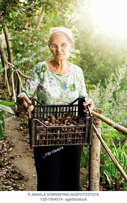 Senior woman in countryside with basket of nuts during fall season