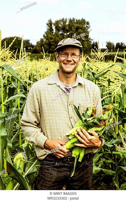 Smiling farmer standing in a corn field, holding bunch of maize cobs