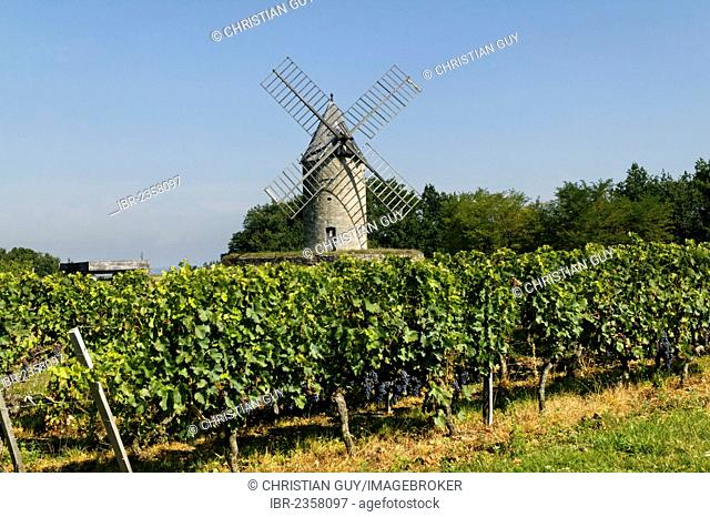 Windmill, Chateau Calon, AOC Montagne Saint Emilion, Bordeaux vineyard, Aquitaine, France, Europe