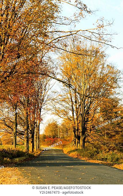 A rural road in autumn, in Shelburne, Massachusetts, USA