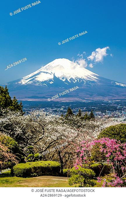 Cherry Blossoms, colorful, colors, flowers, Fuji, Gotemba City, japan, landscape, Mount Fuji, no people, spring, tourism, travel