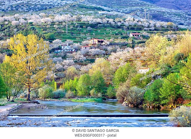 Spain, Extremadura, Valle del Jerte, Valley with blooming cherry trees